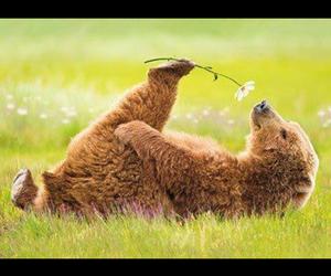 animal, lol, and cute image