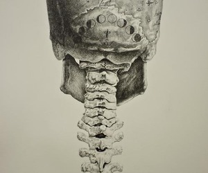 skull, moon, and art image