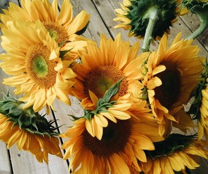 daisys, flowers, and sunflowers image