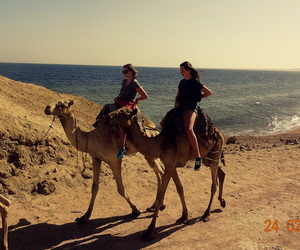 africa, camels, and egypt image