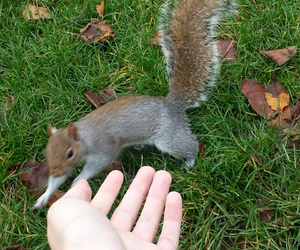 london, squirrel, and cute image