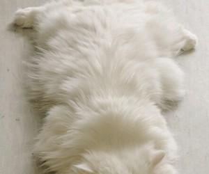 animal, sleep, and sweet image