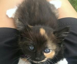 animals, кот, and мимими image