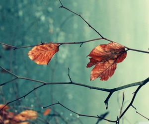 autumn, leaves, and winter image