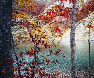 beautiful, autumn, and tree image