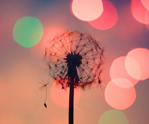 flowers, light, and dandelion image