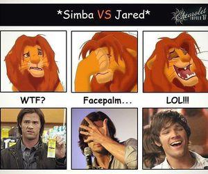 jared, lion, and Sam image
