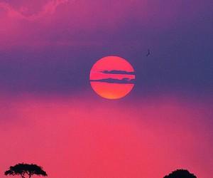 sunset, pink, and sun image