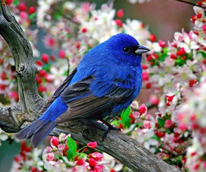 bird, blue, and flowers image