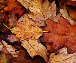 autumn, leaves, and brown image