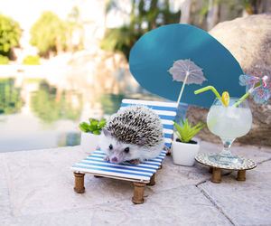 cute animals, hedgehogs, and chilling by the pool image