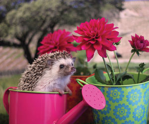 cute animals and hedgehogs image