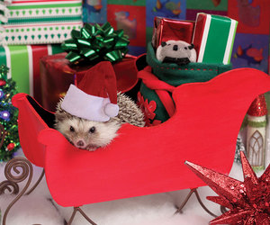 christmas, hedgehogs, and cute animals image