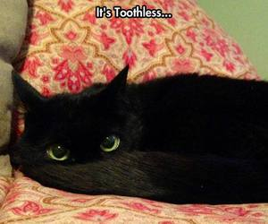 toothless, cat, and cute image