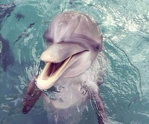 dolphin, animal, and cute image