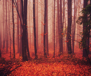 autumn, fog, and forest image