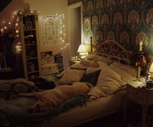 bedroom, dog, and pretty image
