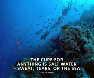 diving, quote, and reef image