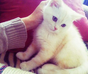 kitten, cute, and adorable image