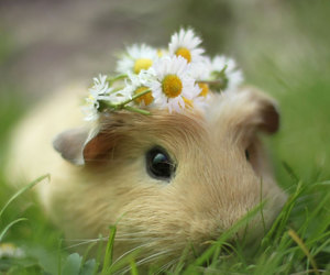 brown, cutie, and flower crown image