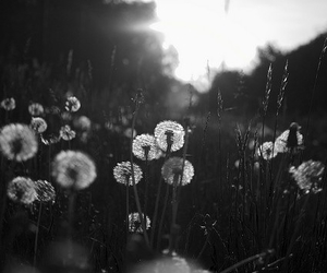 black and white, photography, and flowers image