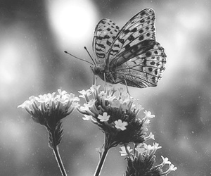 butterfly, flowers, and beautiful image