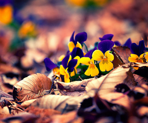 flowers, autumn, and leaves image