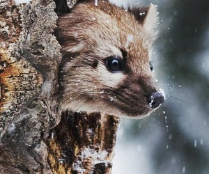 animal, cute, and winter image