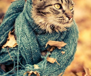 cat, autumn, and scarf image