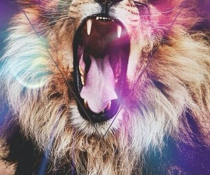 hipster and lion image