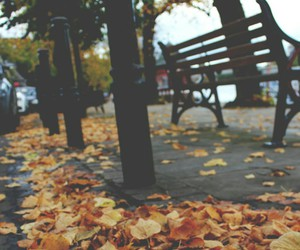 autumn, indie, and photo image