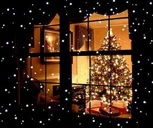 christmas, christmastree, and december image