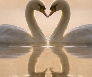 heart, mirror, and swans image