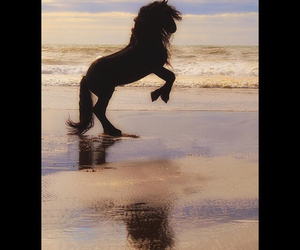 beach, black beauty, and black horse image