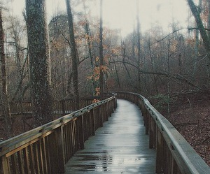 rain, nature, and bridge image