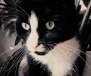 animal, black, and wite image