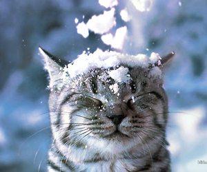 cat, winter, and cute image