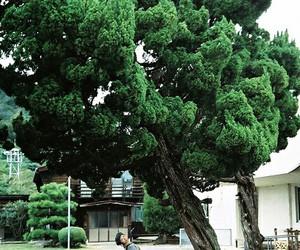 tree, girl, and vintage image