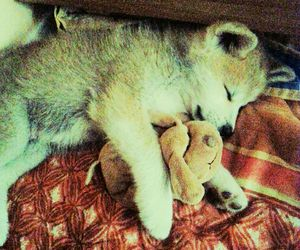 dog, hachiko, and lovely image