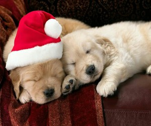 dog, puppy, and christmas image