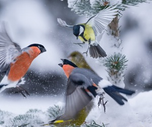 birds, nature, and snow image