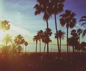 beach, palms, and beautiful image