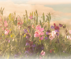 amazing, fashion, and flowers image