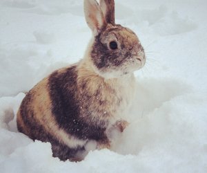 bunny, norway, and cute image