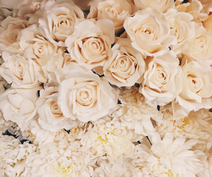flowers, pure, and white image