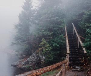 bridge, fog, and forest image