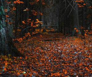 image, creative commons, and autumn image