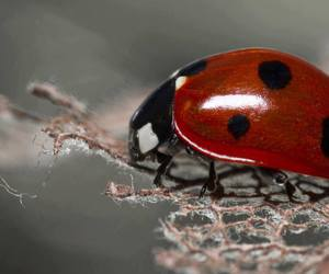animal, ladybird, and nature image