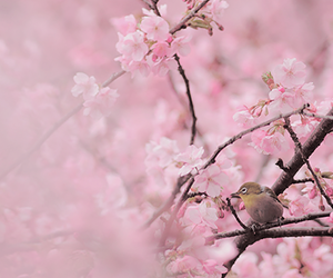bird, nature, and pink flowers image