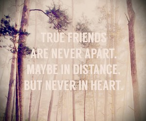 forrest, friends, and life image